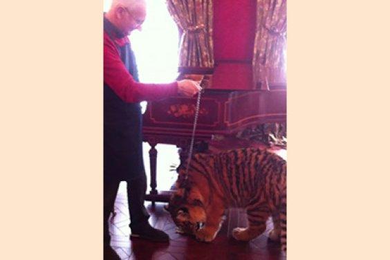 Неожиданная встреча с тигром при настройке рояля STEINWAY & SONS